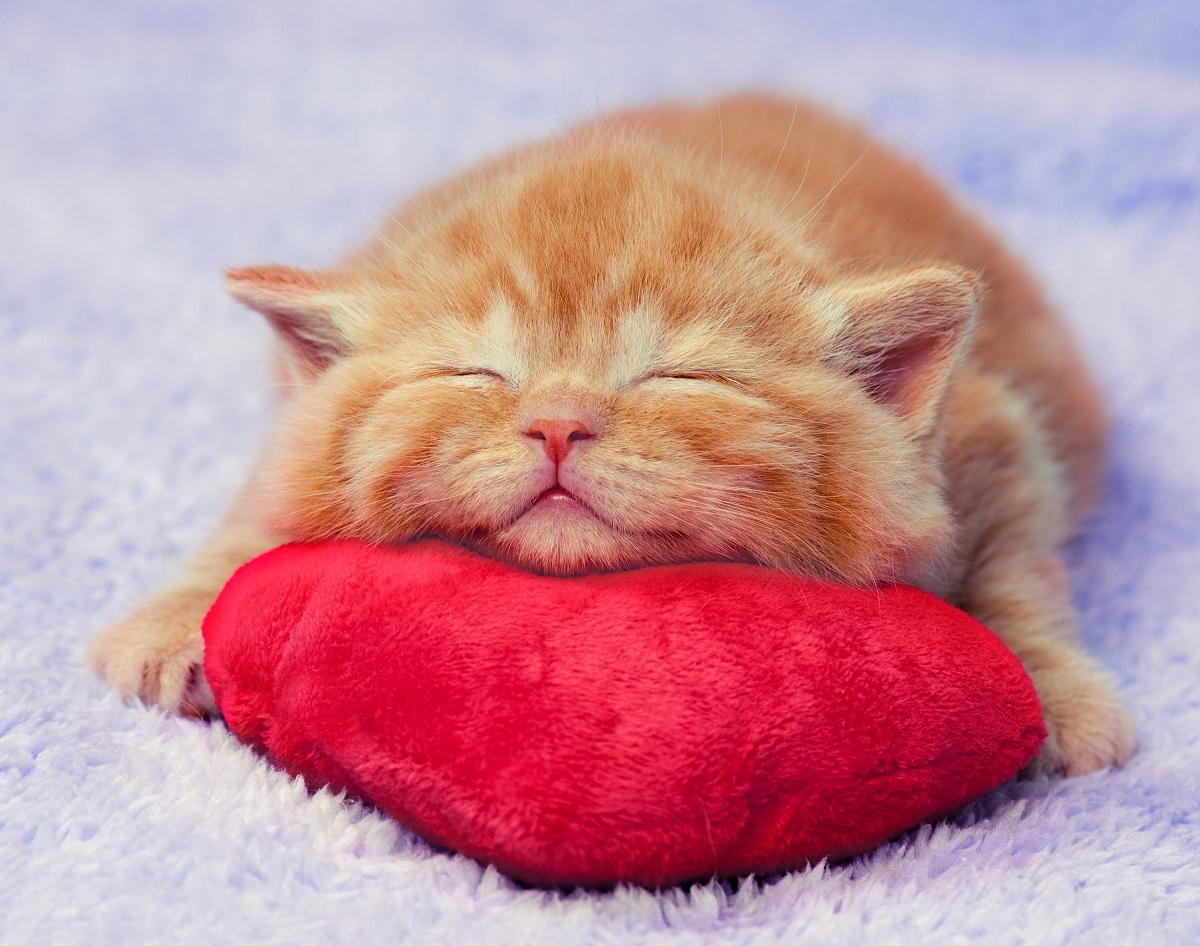 甘えるのが苦手」な人へ。猫に学ぶ、上手な甘え方8つの極意 OTONA ...